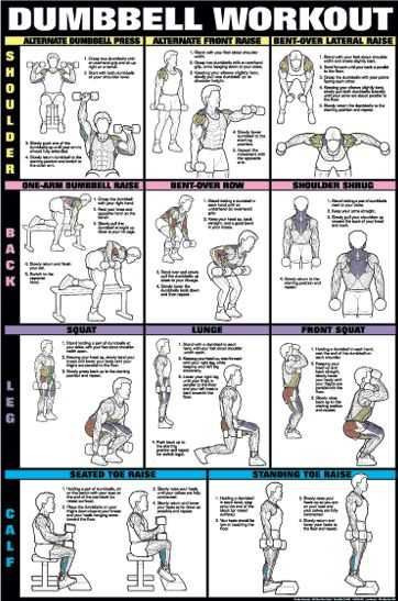 Pics Photos - Workout Routine For Dumbbell Exercises