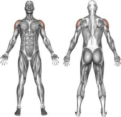 musculos parte lateral