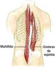 Anatomia músculos lombares
