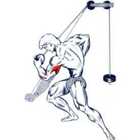 Tríceps pulley invertido unilateral
