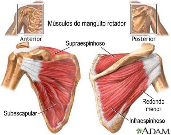 musculos do manguito rotador